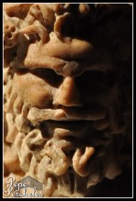 Efebo Antequera 10 (2)