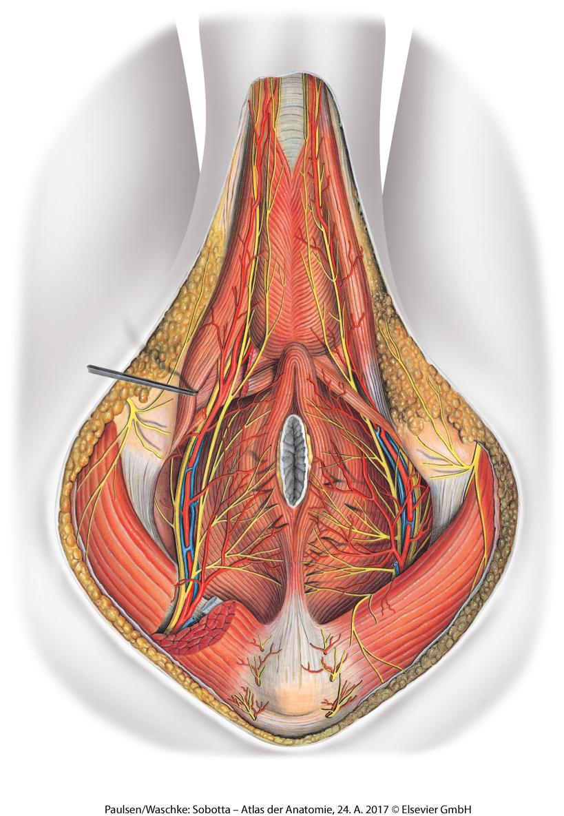 medium resolution of luckily most of the genital health and prostate problems are not invincible and men can reduce the genital health risks by making smart choices