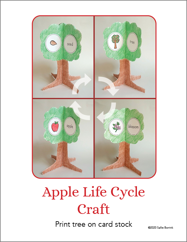 Apples Life Cycle Craft A Quiet Simple Life With Sallie Borrink