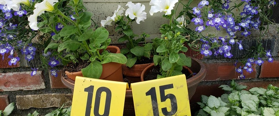 Flowers and Crime Scene Markers