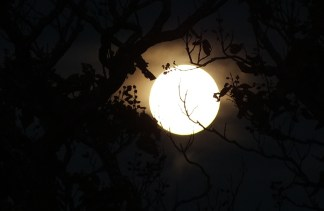 Moon-tree silhouette2