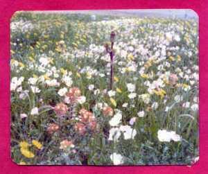 75wildflowers