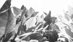 tobaccoprime2