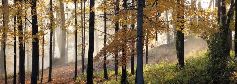 cropped-halloweenmorning20123.jpg