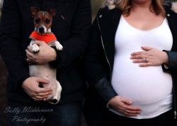 Pregnant couple with miniature jack Russell dog and baby bump