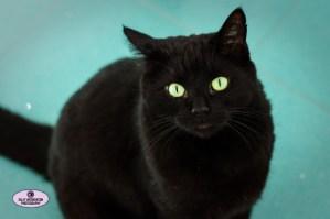 aqua sparkly tiles striking black cat Max green eyes handsome beautiful Sally Widdowson Photography