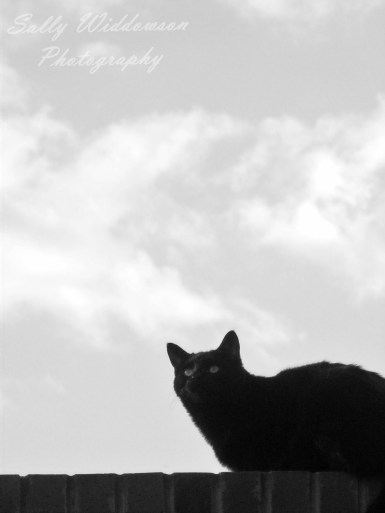 Silhouette of black cat on a wall black and white cloudy sky