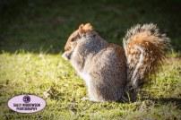 squirrel-2-2