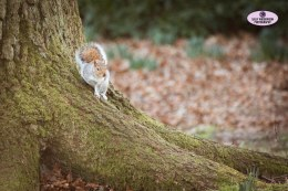 squirrel-3