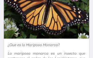 Lanzan Aplicación para monitorear paso de la mariposa monarca por…