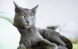 ¿Qué tanto conoces a tu gato?