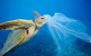 Una sola pieza de plástico puede matar a una tortuga