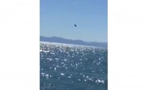 Helicóptero de Semar sufre caída; hay 2 heridos delicados y…