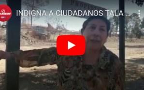 INDIGNA A CIUDADANOS TALA DE ÁRBOLES EN PREDIO PRESUNTAMENTE PRIVADO.
