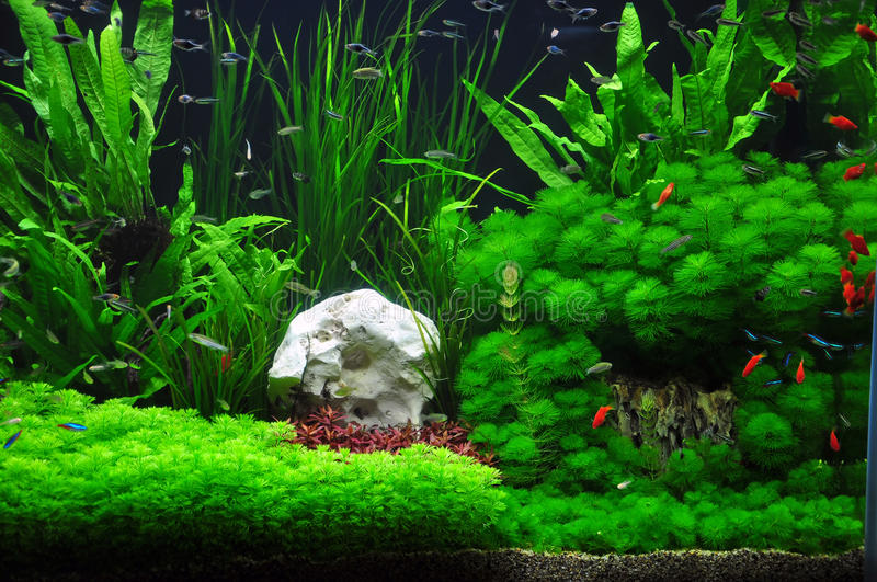 aquatic plant management