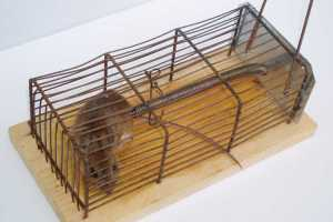 how to use a mouse trap