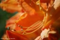 Close up to an orange native