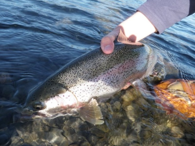 Idaho Salmon or Snake River Wilderness Fly Fishing Bass