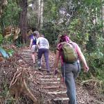 Borneo Jungle trek in the heart of the rainforest included in your adventure/ tour