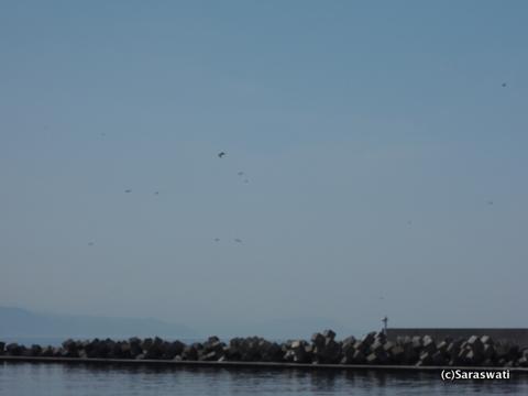 急にやって来た鳥の群れ