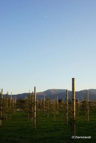 林檎農園と月