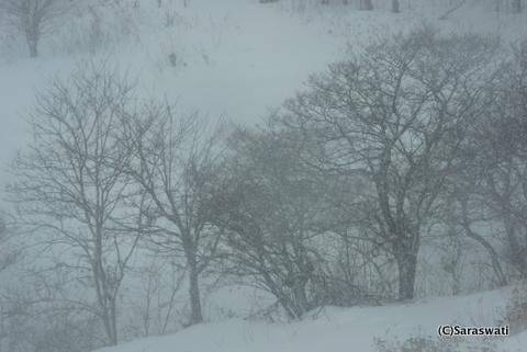 数年に一度の猛吹雪