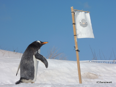 小樽水族館・ペンギン散歩