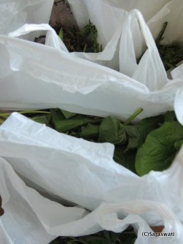 滝本農場さんの山菜