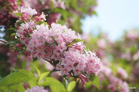 群生している花樹