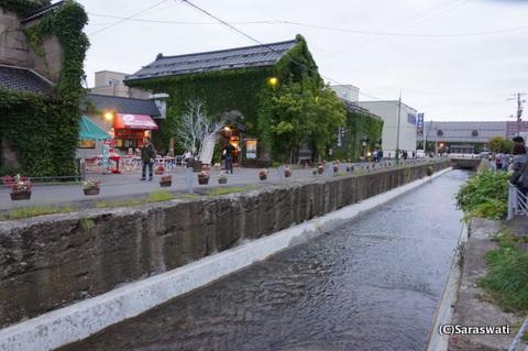 勝納川へのサケ遡上