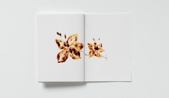 Reflexiones tropicales, Tania Pleitez
