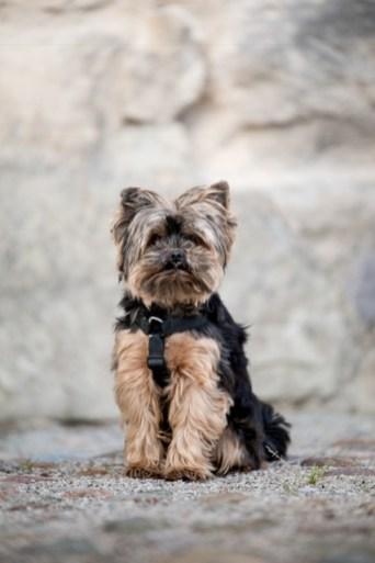 Hunden Ruben