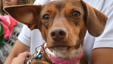 Photo of En 20 días se realizaron 740 atenciones en el Hospital Municipal de Salud Animal