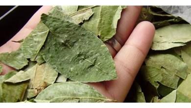 Photo of Regular la importación de hoja de coca en Salta: detalles del proyecto