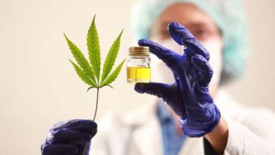 Photo of Legisladores provinciales buscan «facilitar» el uso de cannabis medicinal
