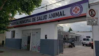 Photo of Se realizó una compleja cirugía en el Hospital Municipal de Salud Animal
