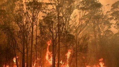 Photo of Incendios forestales en Australia ya dejaron 24 muertos y arrestaron a supuestos responsables