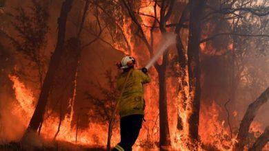 Photo of Alarmante: ya son mil millones los animales muertos en Australia por los incendios