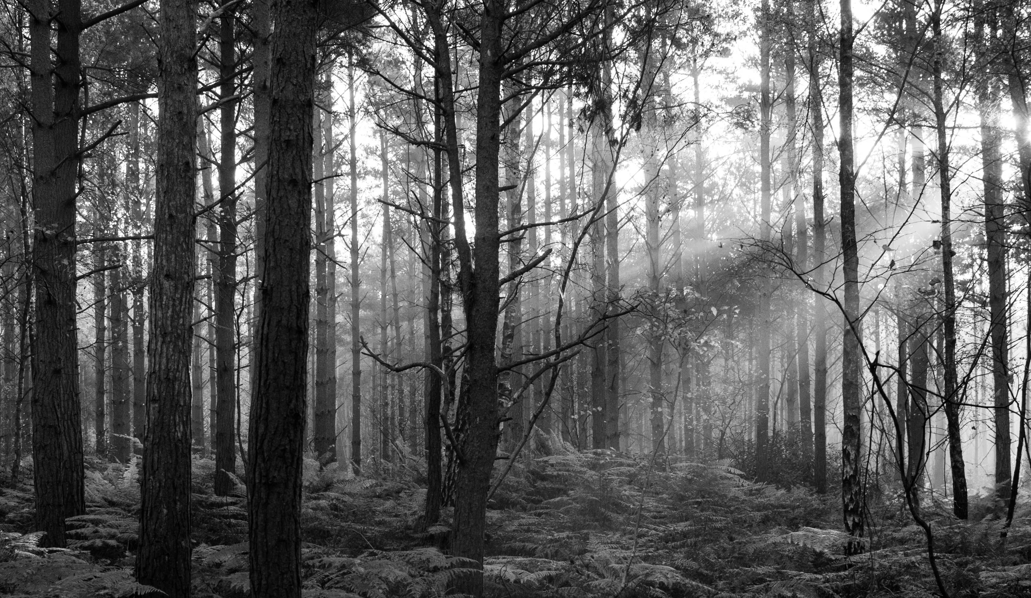 The Deep Dark Woods  salt and fresh