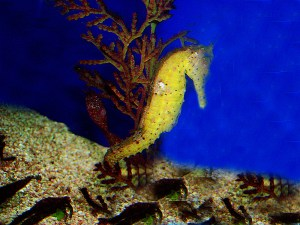 S.E.A Aquarium at Resorts World Sentosa, Singapore
