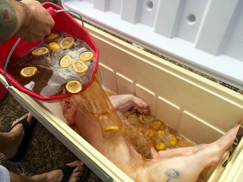 Brining the pig
