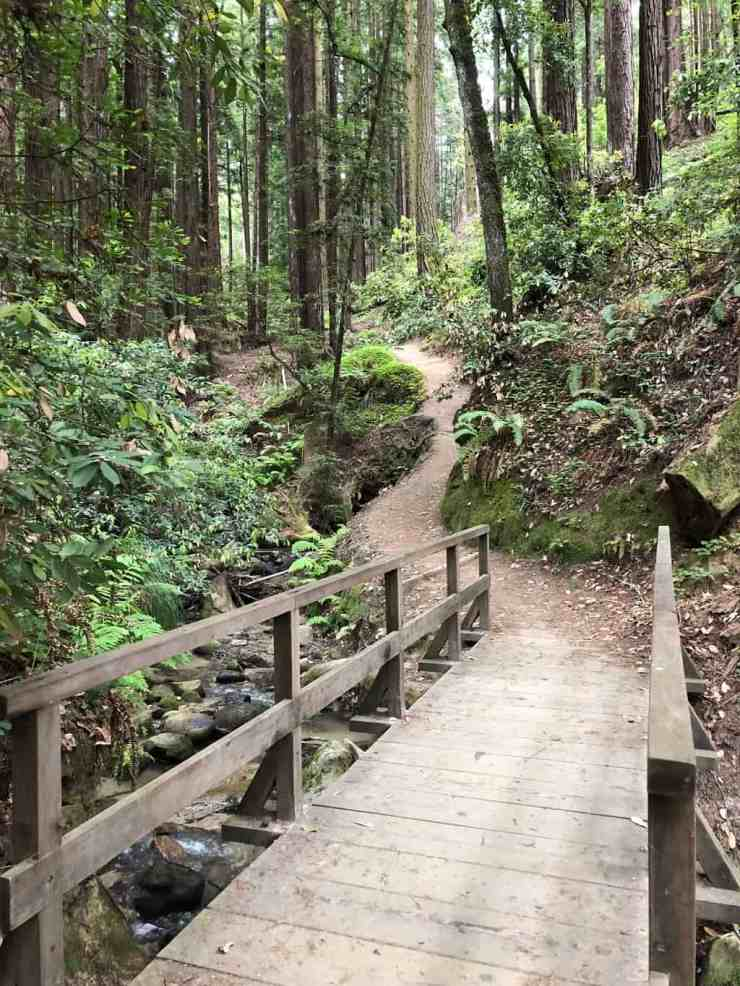 wooden bridge leading over a creek with a trail going up a hill through the redwood forest