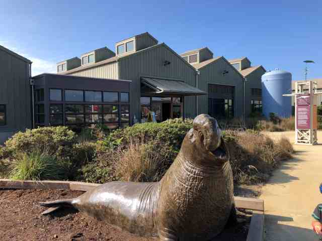 large elephant seal statue in front of the seymour center aquarium in santa cruz california.