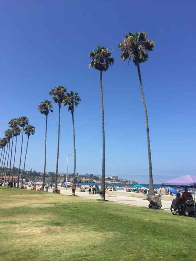 grassy lawn and palm trees next to a beach crowded with people and beach umbrellas