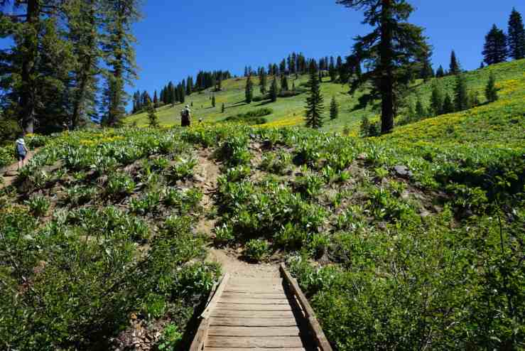 a little wooden bridge with a hillside of yellow wildflowers in the background. Hiking is one of the best things to do in Lassen National Park.