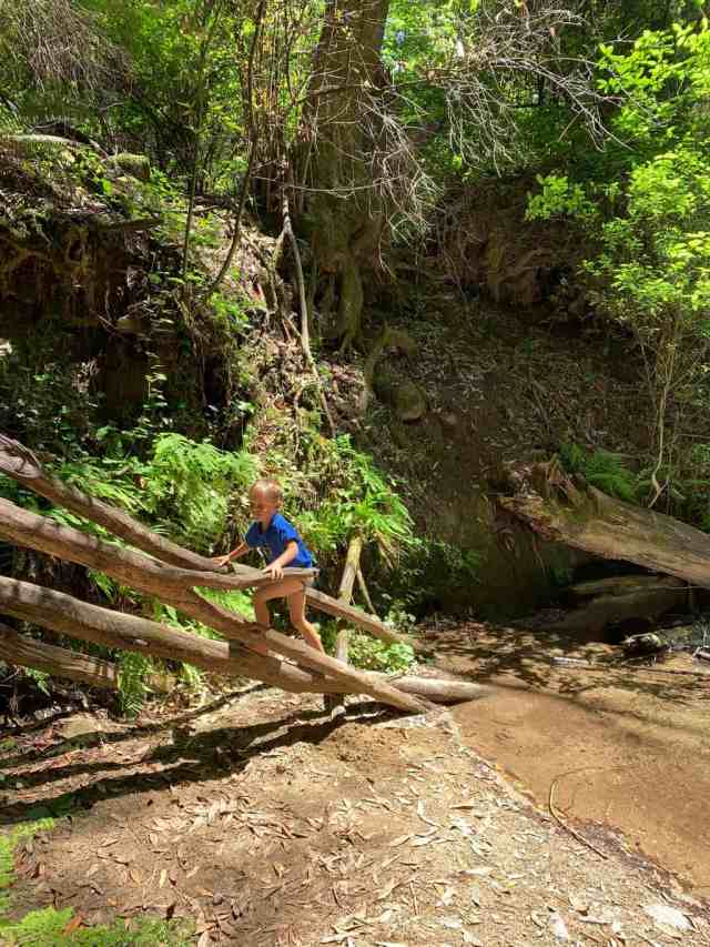 young boy climbing on logs next to a creek in Fall Creek State Park in Felton CA. Kids will love hiking in Fall Creek.