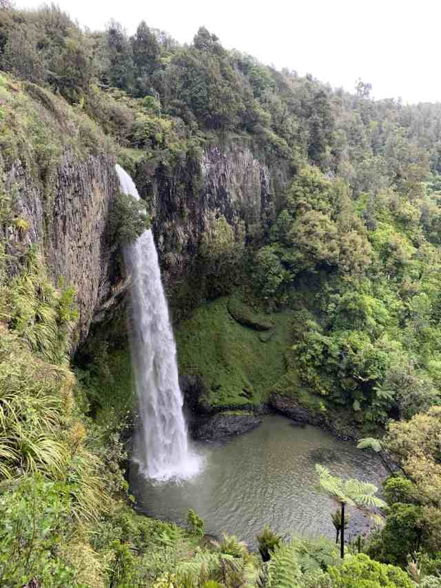 Bridal Veil falls near Raglan is one of the best short hikes in New Zealand. Tall cascade of water coming off of a black cliff into a pool below.