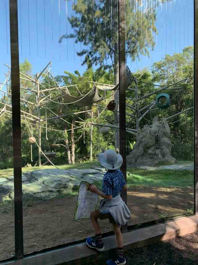 Boy watching monkey at San Diego Zoo