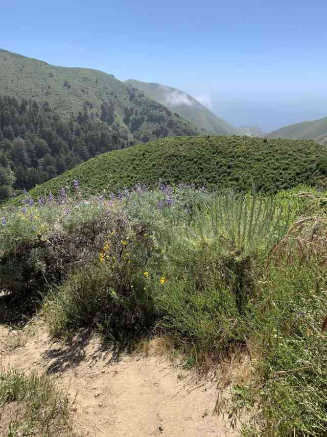 Hiking in Big Sur at Garrapata