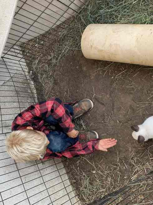 boy playing with rabbit at Bar SZ Ranch